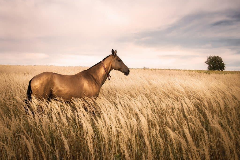 Fleurs de Bach pour chevaux