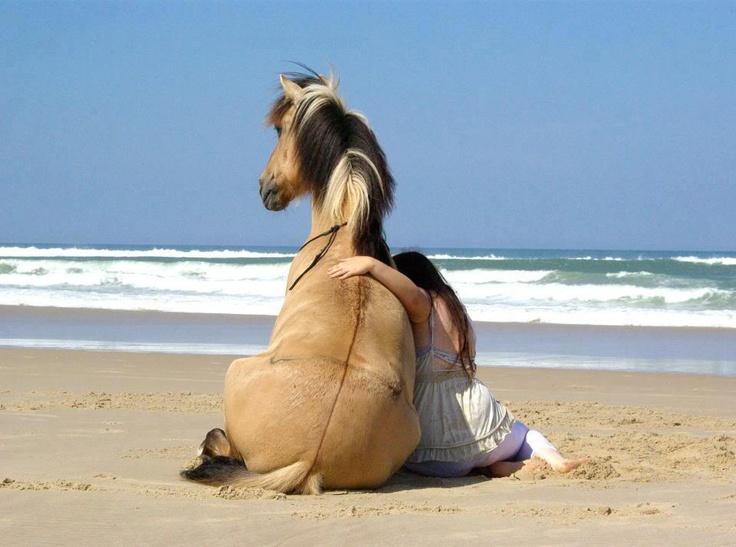 pensions chevaux retraite ou pré retraite
